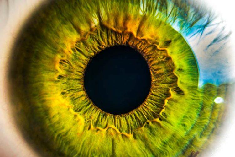 Lumière bleue et fatigue oculaire